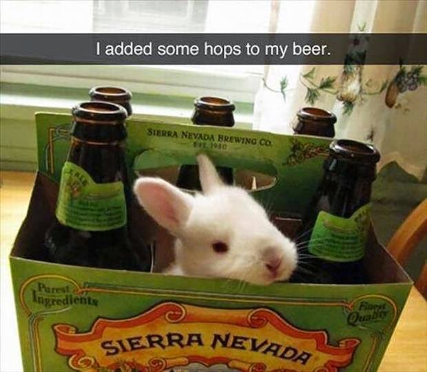 Adding Hops To Beer