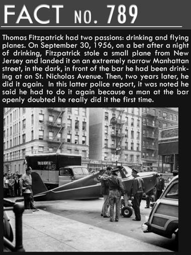 Fly drunk2