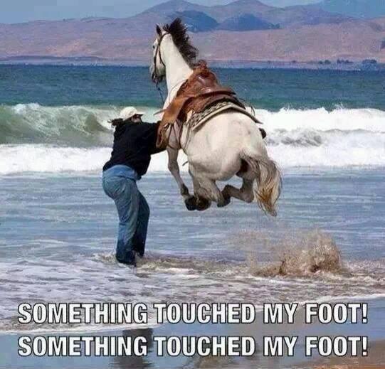 Skittish horse