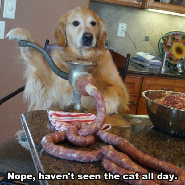 What cat_nope