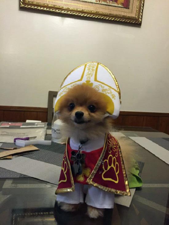 papal-pup
