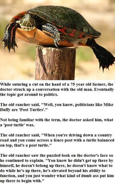 post-turtle.jpg